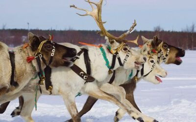 Lapland 2020 Now On Sale!