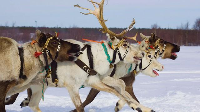 Lapland Santa Sleepover Offer